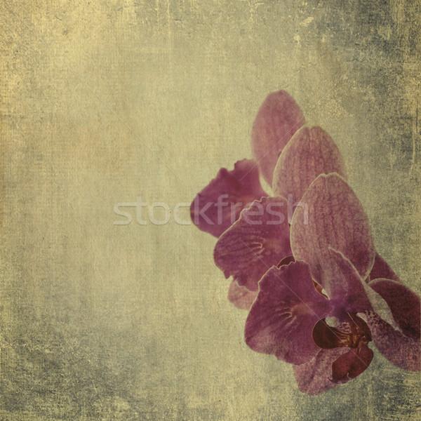 Mintázott régi papír magenta orchidea papír tapéta Stock fotó © Zhukow