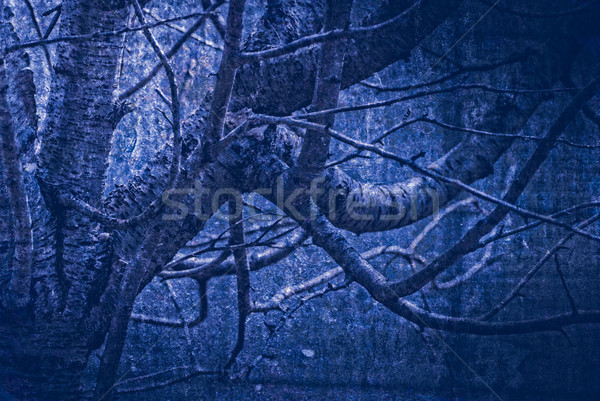 artwork in painting style gloomy wood in dark blue tones Stock photo © Zhukow