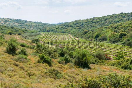 Judean Hills near Beit Shemesh Stock photo © Zhukow
