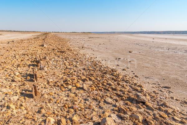 árbol lago Ucrania banco salado calentamiento global Foto stock © Zhukow