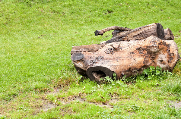 Felled  tree on a glade Stock photo © Zhukow