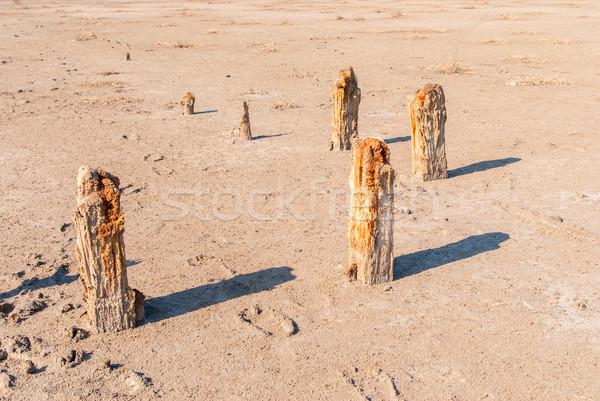árbol lago Ucrania banco salado cielo Foto stock © Zhukow