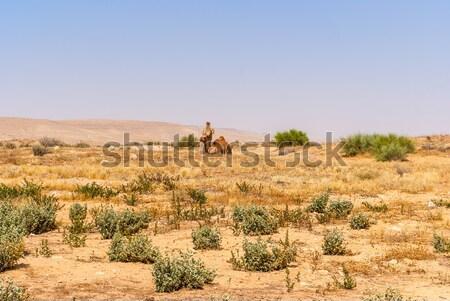 Arab tevék háziasított nyáj horzsolás izraeli Stock fotó © Zhukow