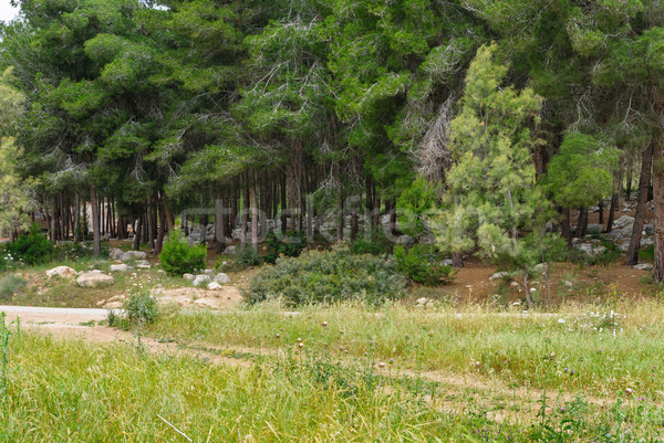 Voorjaar pine bos stenen Israël weg Stockfoto © Zhukow