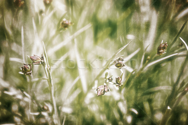 Background of textured wildflowers, artwork in painting style Stock photo © Zhukow