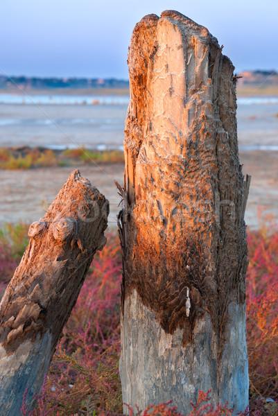 petrified tree stubs on the lake, Kuyalnik, Ukraine Stock photo © Zhukow