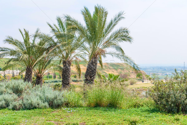 Ariel Sharon park , Israel Stock photo © Zhukow