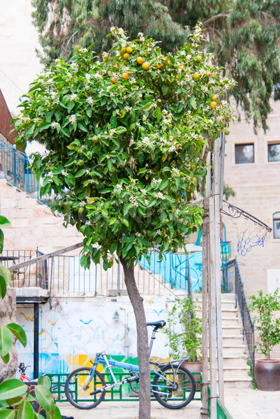 Jerusalem courtyard in the old town Stock photo © Zhukow