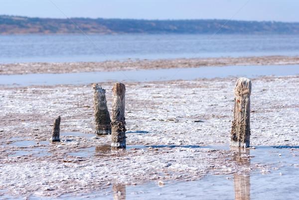 Arbre lac Ukraine banque salé réchauffement climatique Photo stock © Zhukow