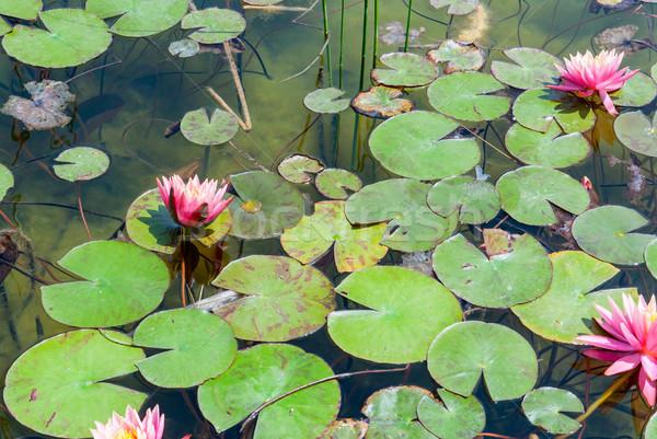 Parque jardim lagoa desperdiçar primavera Foto stock © Zhukow