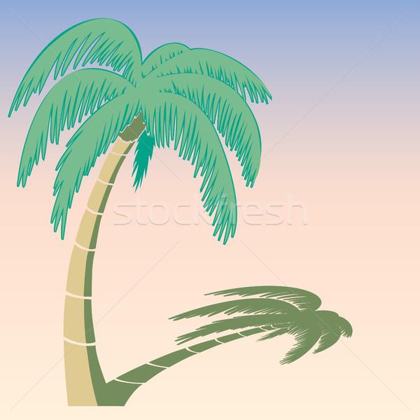 Palmeira brilhante verão solar sombra árvore Foto stock © Zhukow