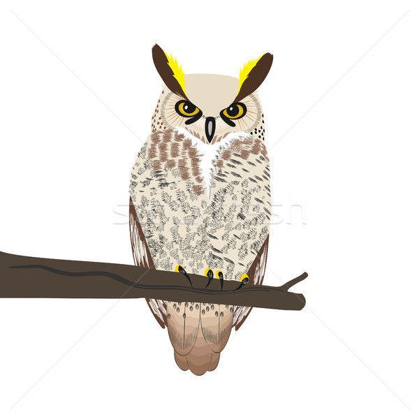Owl sits on a tree branch. Stock photo © Zhukow