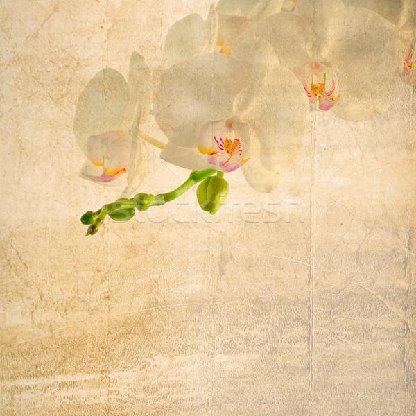 Mintázott régi papír fehér magenta orchidea papír Stock fotó © Zhukow