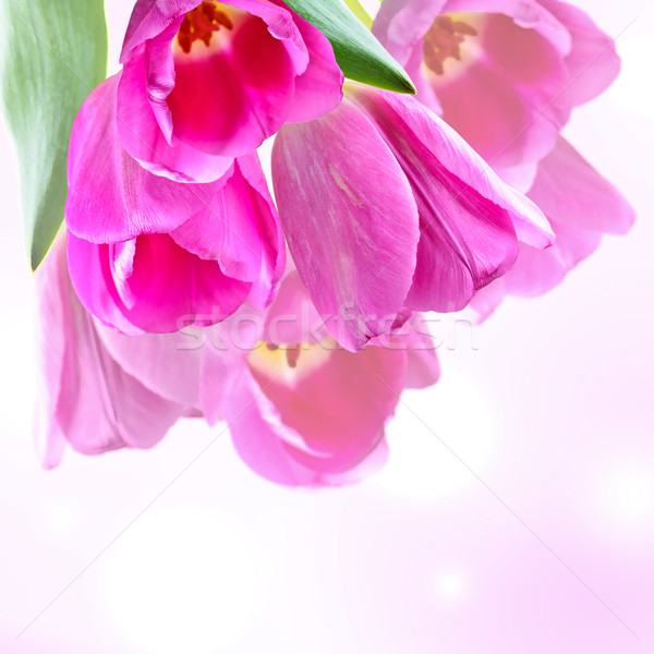Kolaż różowy tulipany świetle kwiat tekstury Zdjęcia stock © zia_shusha
