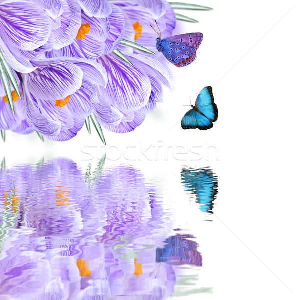 Floral background Stock photo © zia_shusha