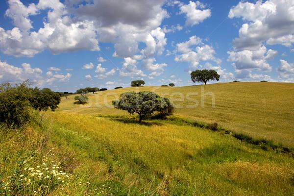 çiftlik görmek güney Portekiz bulutlar bahar Stok fotoğraf © zittto