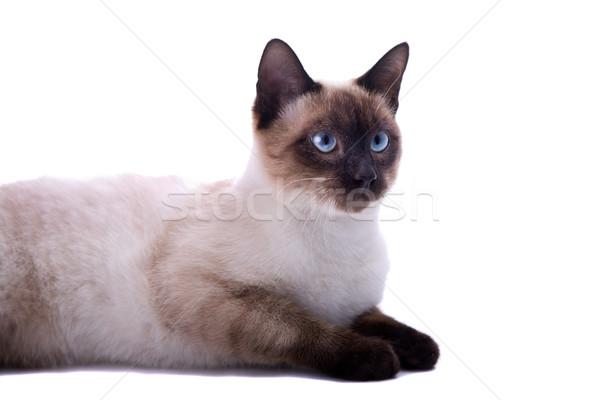 Kahverengi kedi bakıyor doğru beyaz uzay Stok fotoğraf © zittto