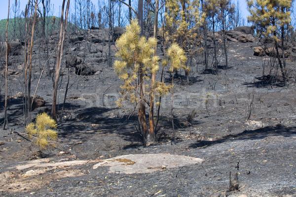 Incendios forestales forestales enorme fuego norte Portugal Foto stock © zittto