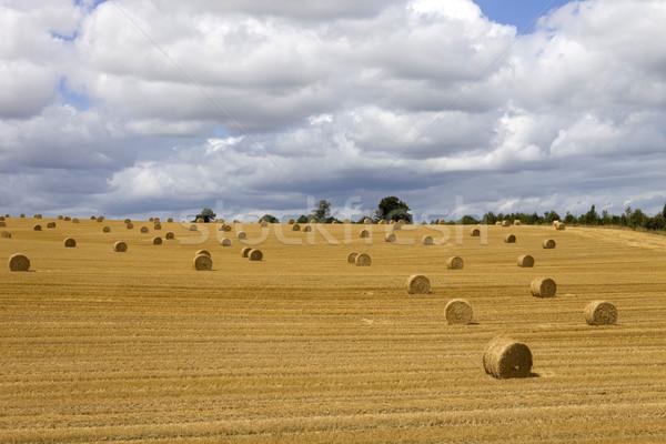 Secar feno campo norte França céu Foto stock © zittto