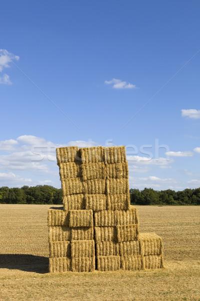 Száraz széna mező észak Franciaország égbolt Stock fotó © zittto
