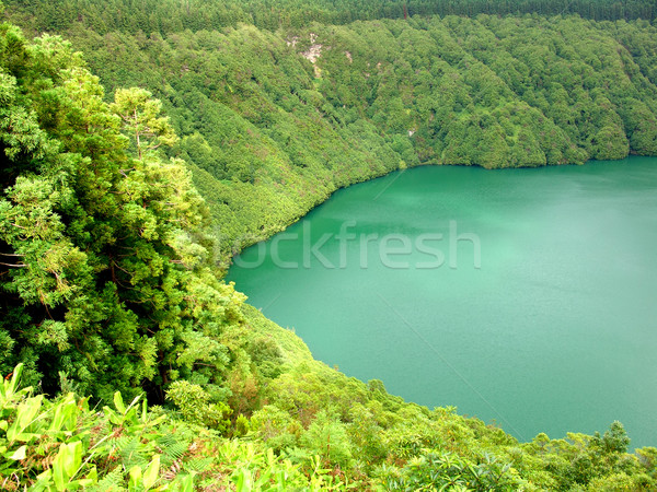 Lago água árvores planta ilha férias Foto stock © zittto