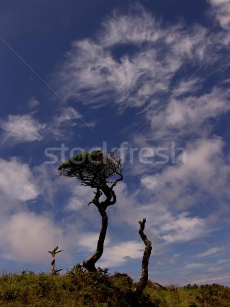 trees Stock photo © zittto