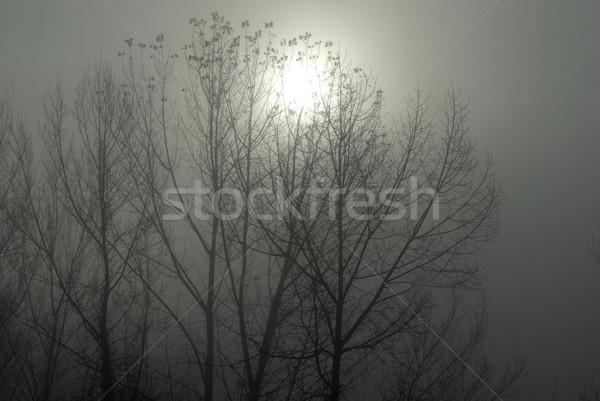 Niebla árbol sol niebla con humo forestales Foto stock © zittto