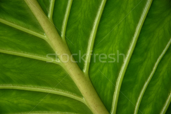Linie liści szczegół drzewo streszczenie charakter Zdjęcia stock © zittto