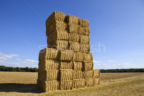 Drogen hooi veld noorden Frankrijk hemel Stockfoto © zittto