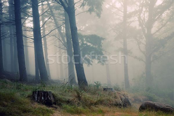 Foresta pluviale madeira montagna mondo patrimonio erba Foto d'archivio © zittto