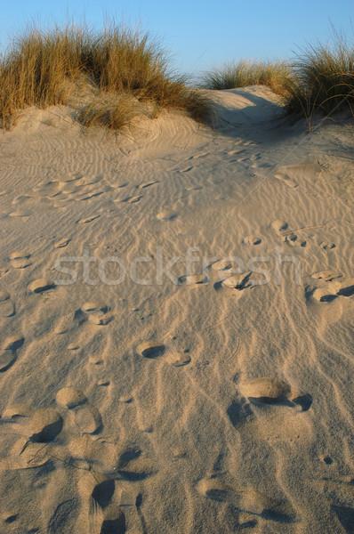 Kumul ayak izleri adam doğa sağlık seyahat Stok fotoğraf © zittto