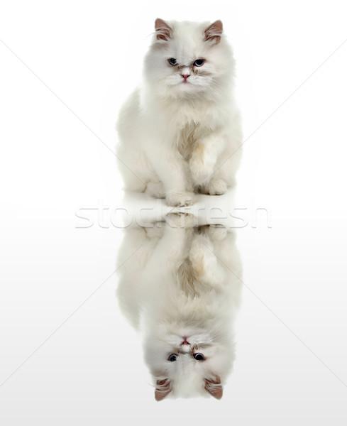 Fehér macska kék szemek digitális víz tükröződés Stock fotó © zittto