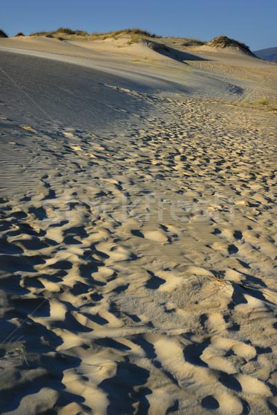 サハラ砂漠 砂漠 砂 青空 抽象的な 風景 ストックフォト © zittto