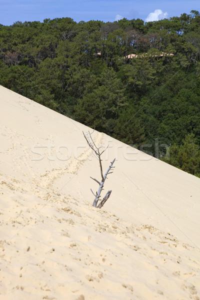 Pyla Sur Mer Stock photo © zittto