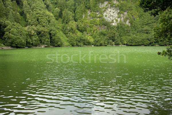 Lago verde água paisagem árvores planta Foto stock © zittto