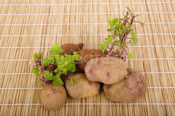 Stock photo: Potatoes sprouting