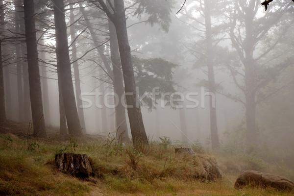 rainforest Stock photo © zittto