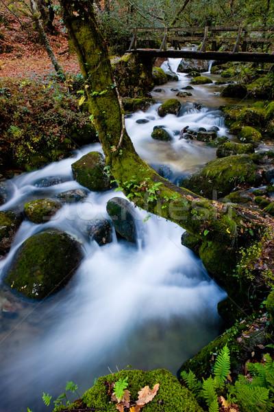 Stok fotoğraf: çağlayan · nehir · park · kuzey · ülke · orman