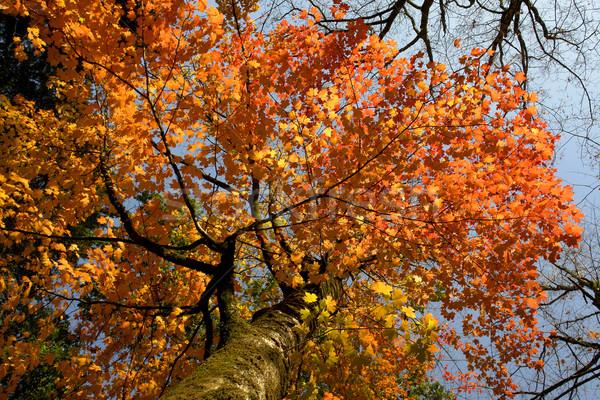 leaves Stock photo © zittto