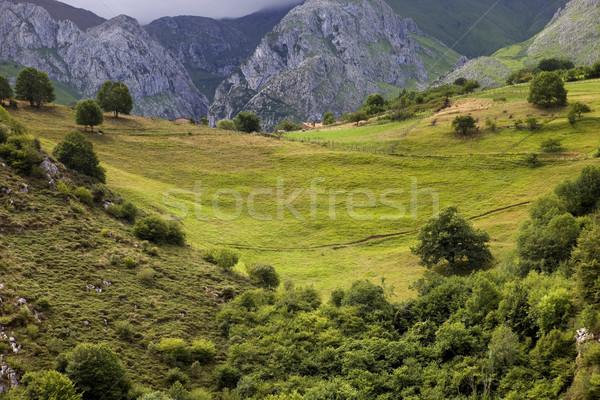 Picos de europa Stock photo © zittto