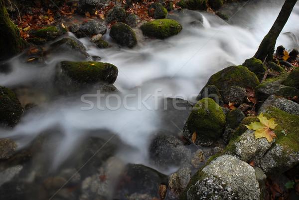 Stok fotoğraf: Nehir · sonbahar · detay · gökyüzü · ağaç · orman