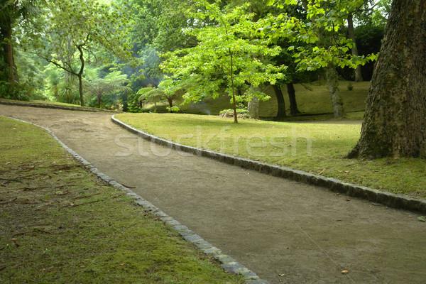 Arbres chemin ciel printemps route nature Photo stock © zittto