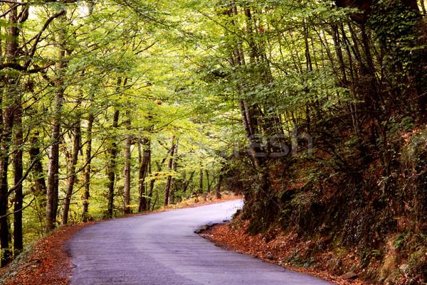 Automne chemin arbres printemps route nature Photo stock © zittto