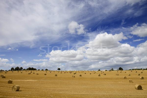 Wyschnięcia siano dziedzinie na północ Francja niebo Zdjęcia stock © zittto