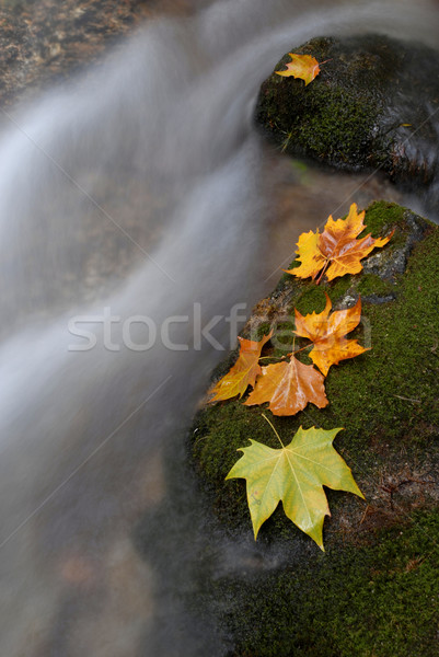 Stock photo: leaves