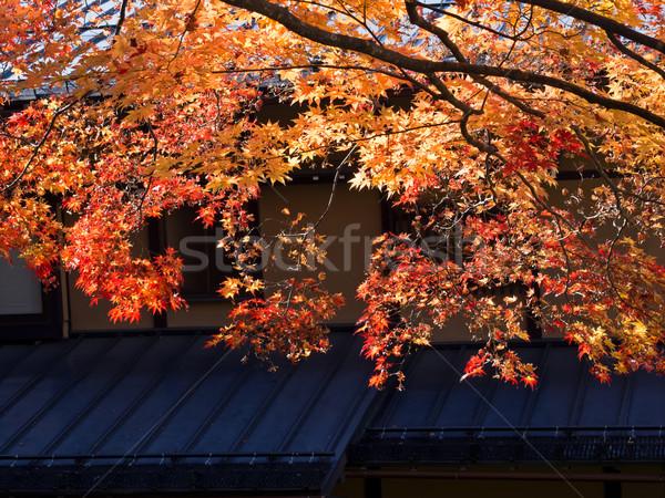 backlit golden autumn foliage Stock photo © zkruger