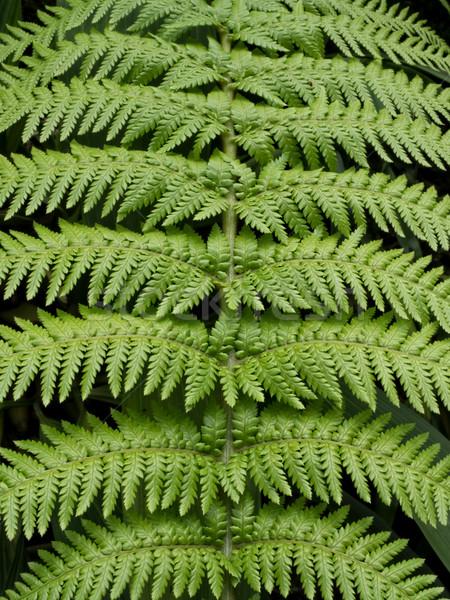Varen blad textuur groene kleur Stockfoto © zkruger