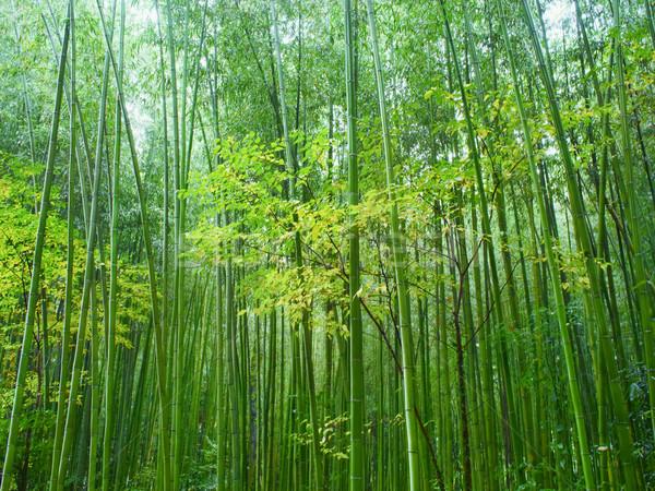 Exuberante verde bambú forestales escénico Foto stock © zkruger