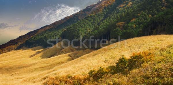 Campo de hierba naturaleza paisaje campo viaje color Foto stock © zkruger