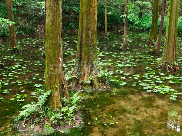Staw zieleń krawędź roślinność drzewo parku Zdjęcia stock © zkruger